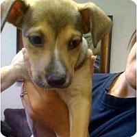 Adopt A Pet :: Sandy - Fowler, CA