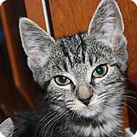 Adopt A Pet :: Jordy (LE) - Little Falls, NJ