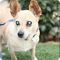 Adopt A Pet :: Ray Charles - Creston, CA