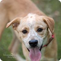 Adopt A Pet :: Watson - Daleville, AL