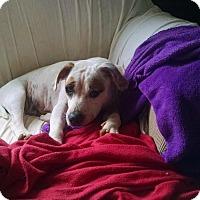 Adopt A Pet :: Abby - Gallatin, TN