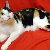 Adopt A Pet :: Reeces - Columbus, NE