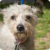 Adopt A Pet :: Laura - Daleville, AL