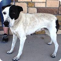 Adopt A Pet :: Holly - Artesia, NM