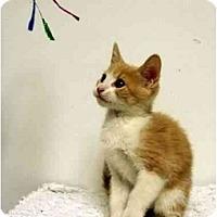 Adopt A Pet :: Bailey - Mesa, AZ