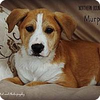 Adopt A Pet :: Murphy - Southington, CT