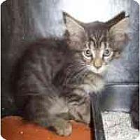 Adopt A Pet :: Finnigan - Arlington, VA