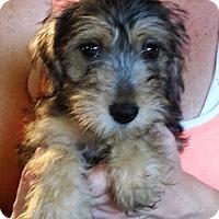 Adopt A Pet :: Nora - Salem, NH