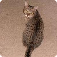 """Adopt A Pet :: Daniel&Cashmere """"Spec. Needs"""" - Sedalia, MO"""