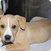 Adopt A Pet :: BUTTERFINGER - Wainscott, NY