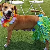 Adopt A Pet :: Delaney - Sarasota, FL