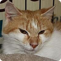 Adopt A Pet :: Riley (PP) - Little Falls, NJ