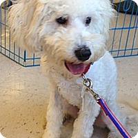 Adopt A Pet :: Hurley - Oceanside, CA