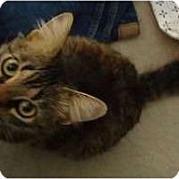 Adopt A Pet :: Sasha - Hurst, TX