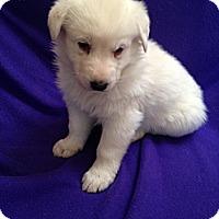 Adopt A Pet :: Marino - Victorville, CA