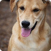 Adopt A Pet :: Spree Eakas - Wynne, AR