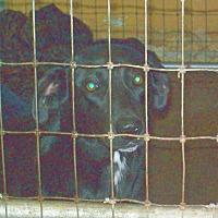 Adopt A Pet :: Babycakes - Mexia, TX