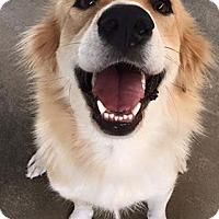 Adopt A Pet :: Magnolia - Russellville, KY