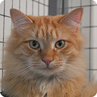 Adopt A Pet :: Peaches & Cream - Winchendon, MA