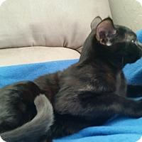 Adopt A Pet :: The Cranky Princess - Englewood, FL
