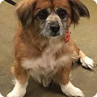Adopt A Pet :: Wasabi - Orlando, FL