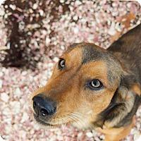 Adopt A Pet :: Trey - Greensboro, GA