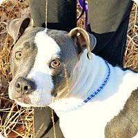 Adopt A Pet :: Russell - Washington, GA
