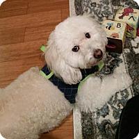 Adopt A Pet :: Uri - Brea, CA