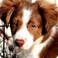 Adopt A Pet :: QUIGLEY(SWEET SWEET PUPPY!!! - Wakefield, RI
