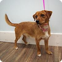 Adopt A Pet :: Clyde - Plainfield, CT