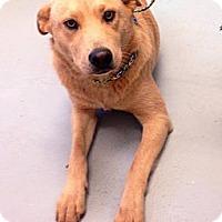 Adopt A Pet :: Lizzie - Camden, SC