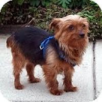 Adopt A Pet :: Cissy - Sheboygan, WI