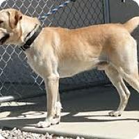 Adopt A Pet :: Cracker Jack - Lewisville, IN