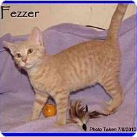 Adopt A Pet :: Fezzer - Orlando, FL