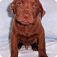 Adopt A Pet :: Conner - Byrdstown, TN