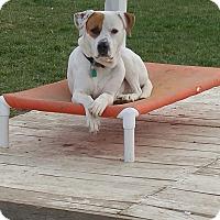 Adopt A Pet :: JAKE - New Windsor, NY