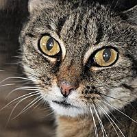 Adopt A Pet :: Queenie - Sterling, MA