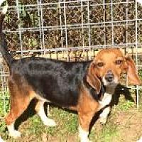 Adopt A Pet :: Lola - Dumfries, VA