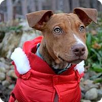 Adopt A Pet :: Tuco Salamanca - Pittsburgh, PA