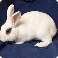 Adopt A Pet :: Jitterbug - Alexandria, VA