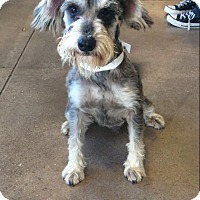 Adopt A Pet :: Captain Jack - Portland, OR