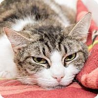 Adopt A Pet :: Harriet Tubman - Lowell, MA