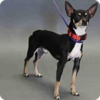 Adopt A Pet :: FIZZGIG - Salt Lake City, UT