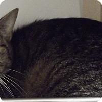 Adopt A Pet :: CHLOE - Cheboygan, MI
