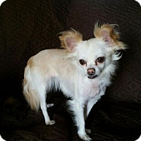 Adopt A Pet :: BIANCA - Norfolk, VA