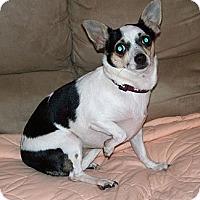 Adopt A Pet :: ALICE - AUSTIN, TX