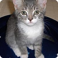 Adopt A Pet :: Sassy - Richmond, VA