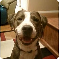 Adopt A Pet :: Gunner - St. Louis, MO