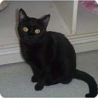 Adopt A Pet :: Licorice - Hamburg, NY