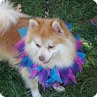 Adopt A Pet :: LEO - Hesperus, CO